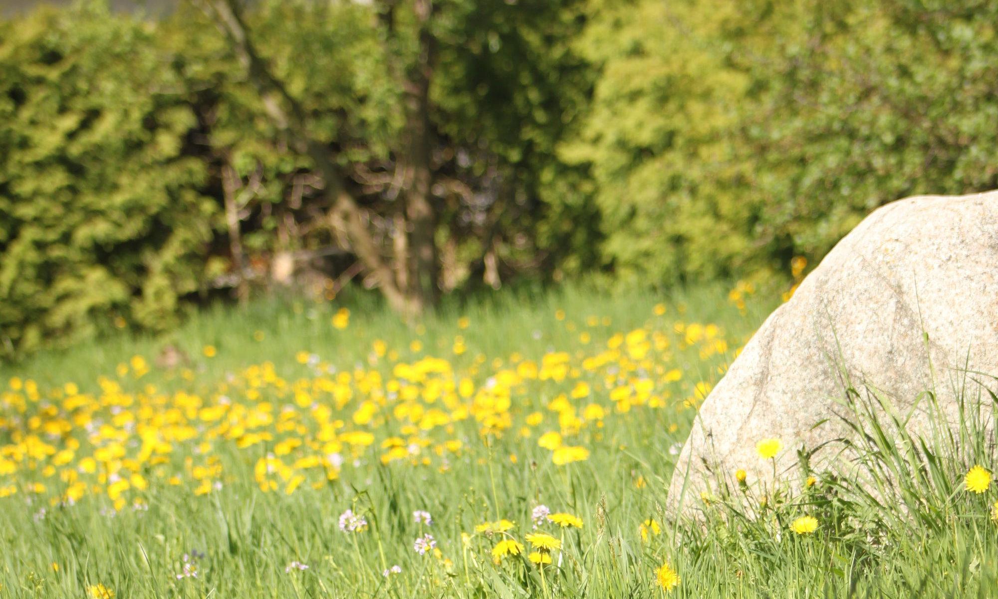 Garten Stein Gras Blumen